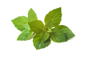 Mint leaves isolated over white background